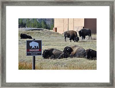 Danger Do Not Approach Wildlife Framed Print