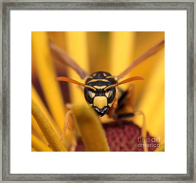 Danger Stare Framed Print by Kenny Glotfelty