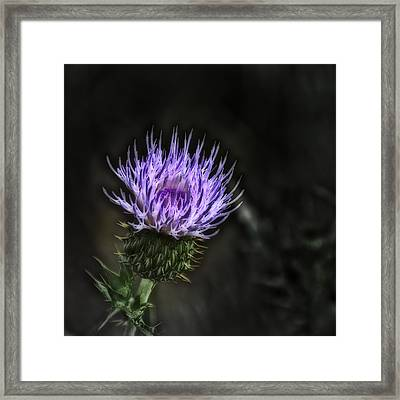 Dangerous Beauty  Framed Print by Thomas Born