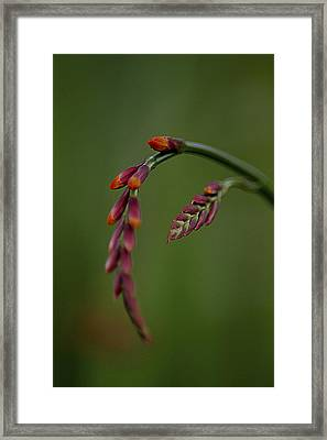 Framed Print featuring the photograph Dangling by Jacqui Boonstra
