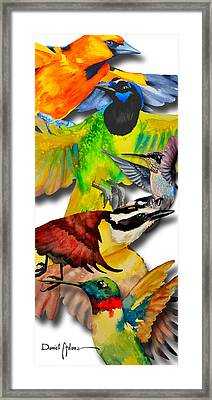 Da131 Multi-birds By Daniel Adams Framed Print