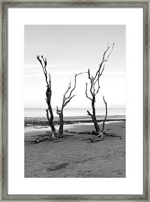 Dancing Trees Framed Print by Thomas Leon