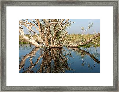 Danube Delta During Spring Framed Print by Martin Zwick