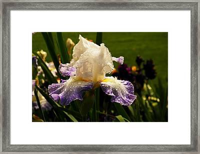 Dappled By Rain Framed Print by Jeff Swan