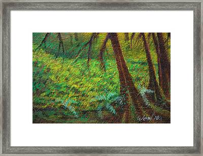 Dappled Forest Framed Print by Daniel Wend