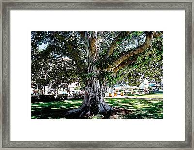 Dappled Light 2 Framed Print by Terry Reynoldson