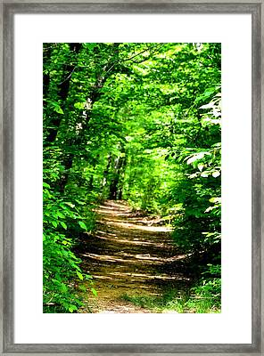 Dappled Sunlit Path In The Forest Framed Print by Maria Urso