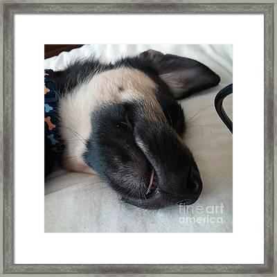 Darcy On The Bed #instadog #ilovemydog Framed Print
