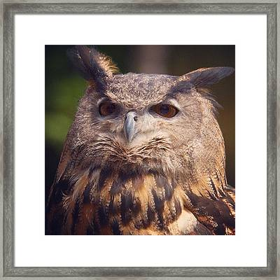 Dare I Say Owls Are A Hoot? Framed Print by Heidi Hermes