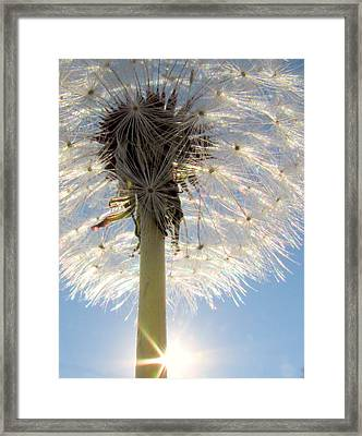 Dare To Be Different Framed Print by Lori Pessin Lafargue