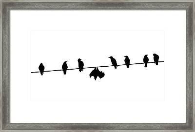 Dare To Be Different - Birds On A Wire Framed Print by Monica Margarida