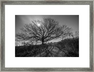 Dark And Twisted Framed Print