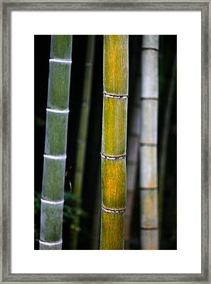 Framed Print featuring the photograph Dark Bamboo by Brad Brizek