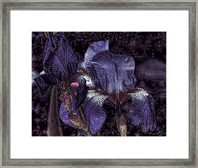 Dark Bearded Beauties Framed Print by Lesa Fine
