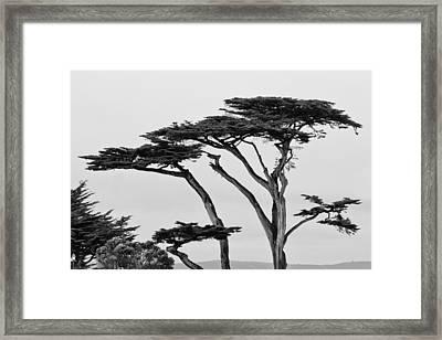 Dark Cypress Framed Print