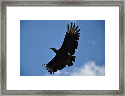 Dark Eagle  Framed Print