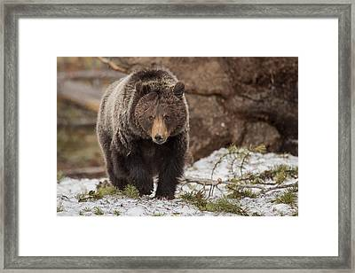 Dark Eyed Beauty Framed Print
