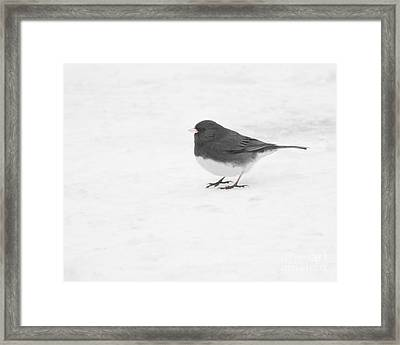 Framed Print featuring the photograph Dark-eyed Junco In Winter by Anita Oakley