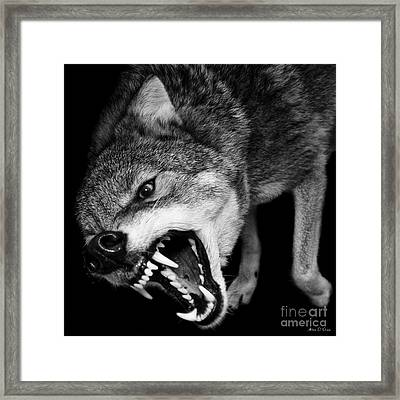 Dark Forest Framed Print by Adam Olsen