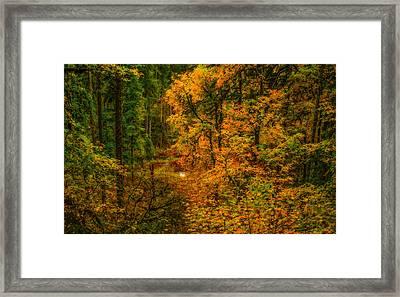 Dark Forest Framed Print by Dennis Bucklin