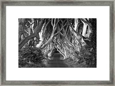 Dark Hedges B W Framed Print by Annie Sobol
