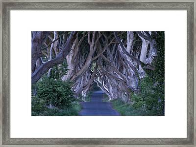 Dark Hedges Cool Framed Print by Annie Sobol