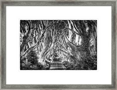 Dark Hedges Framed Print by Craig Brown