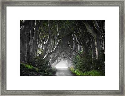 Dark Hedges Framed Print