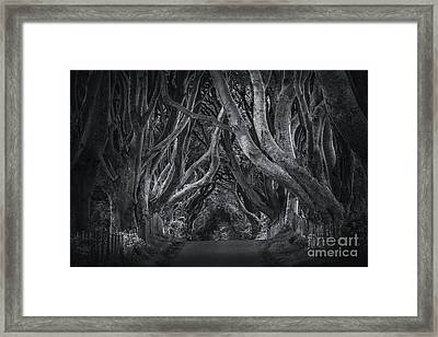 Dark Hedges Framed Print by Svetlana Sewell
