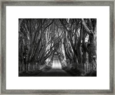 Dark Hedges Ireland Framed Print