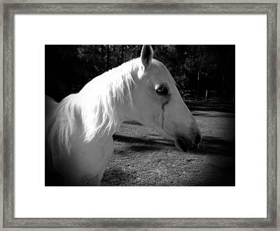 Dark Horse 2 Framed Print by Chasity Johnson