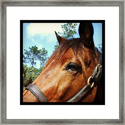 Dark Horse Framed Print by Chasity Johnson