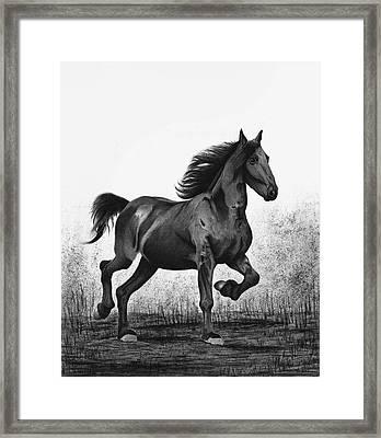 Dark Horse Framed Print by Sesh Artwork