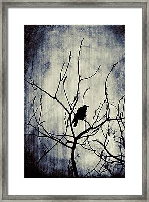 Crow In Dark Lights Framed Print by Gothicrow Images