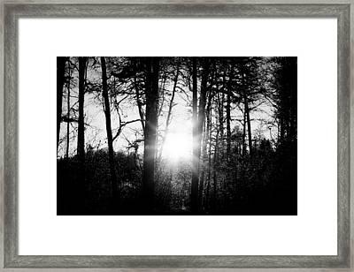 Dark Nature Framed Print by Robert Hellstrom