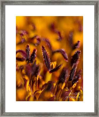 Dark Red Stamins Framed Print by Iris Richardson