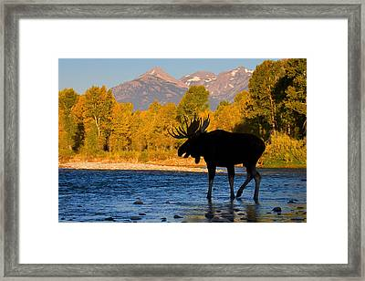 Framed Print featuring the photograph Dark Side Moose                               by Aaron Whittemore