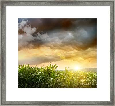 Dark Skies Looming Over Corn Fields  Framed Print by Sandra Cunningham