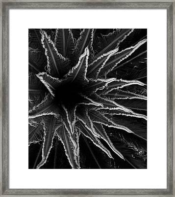 Dark Stars Framed Print by Gustave Kurz