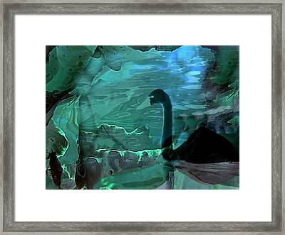 Dark Swan Framed Print