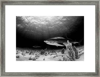 Dark Tiger Framed Print by Ken Kiefer