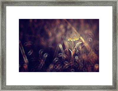Dark Violet Framed Print by Donald Jusa