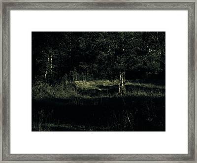 Dark Woods Framed Print by Alexei Biryukoff
