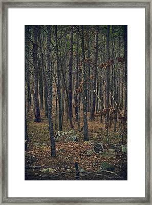 Dark Woods Framed Print