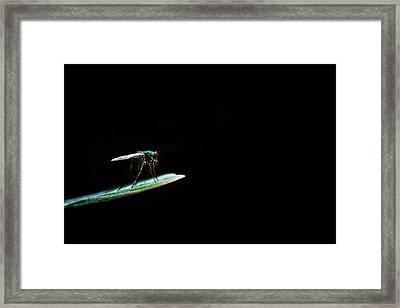Dark World Framed Print by Suradej Chuephanich