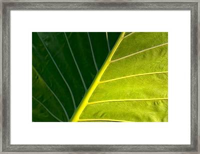 Darkness And Light - Elephant Ear Leaf Details Framed Print by Mark E Tisdale
