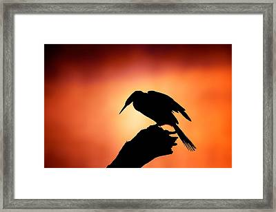 Darter Silhouette With Misty Sunrise Framed Print by Johan Swanepoel