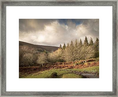 Dartmoor View Framed Print by Jan Bickerton