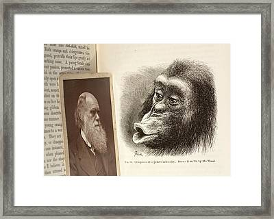 Darwin On Chimpanzee Emotions Framed Print by Paul D Stewart