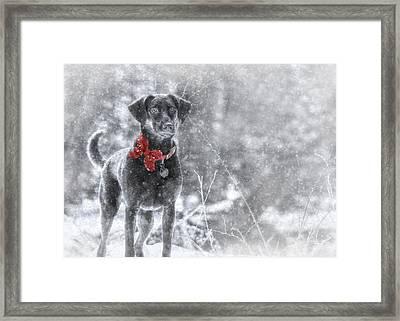 Dashing Through The Snow Framed Print by Lori Deiter